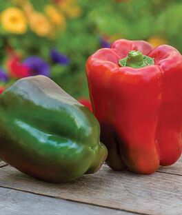 Pepper, Sweet Great Stuff Hybrid, , large